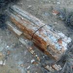 Chinle Trail Petrified Log