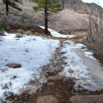 Wildcat Snow