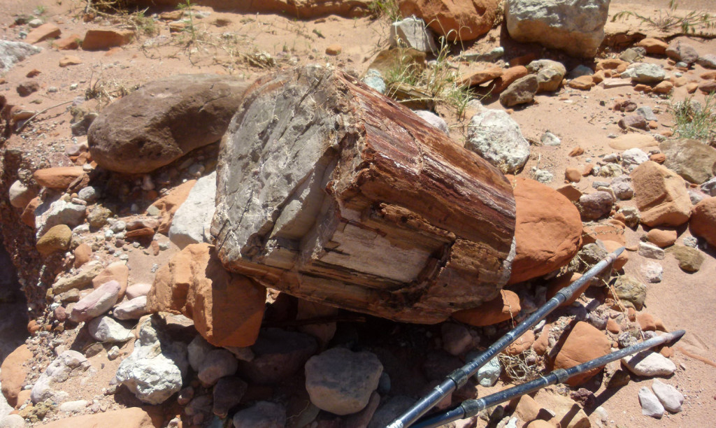 Petrified wood in East Moody Canyon