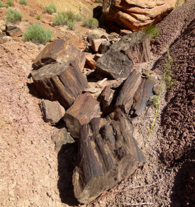 Big petrified wood in north branch of East Moody Canyon