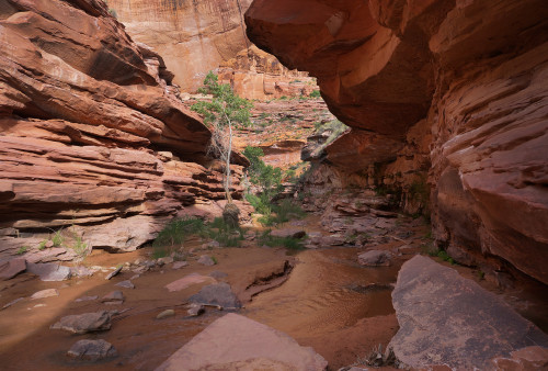 entrenched Lower Coyote Gulch