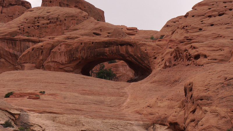 Shy Arch