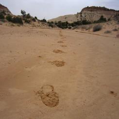 Sandy Upper Main Fork